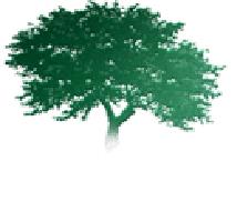 un bel arbre bien vert